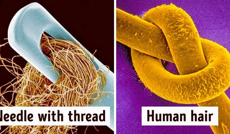 17 Ordinary Things That Look So Weird Under a Microscope They Seem to Belong to a Parallel Universe