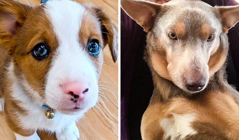 What Happens When Different Breeds Fall in Love